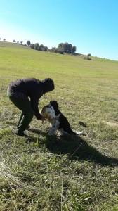 Foukal silný vítr, přesto si Kerd s vlečkou velmi dobře poradil a hezky přinesl a odevzdal těžkého králíka.