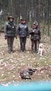 Ukončený dosled divočáka s beaglem Kendallem z Vrbové Lhoty - BZH I.cena.