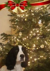 Vesna (Nattynka) bere vánoce vážně.