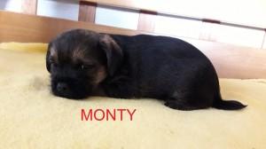 Monty Ostrý lovec