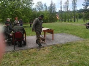 Leska Ostrý lovec na jarním svodu psů.