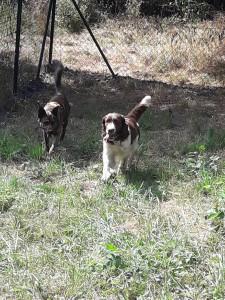 V některých případech provádíme také socializaci a terapii psů, kteří to potřebují. Potřebují zařadit mezi psy, hrát si s nimi a naučit se k ním chovat. K takovým psům patří Charlie a jeho terapeutka je Reisha.