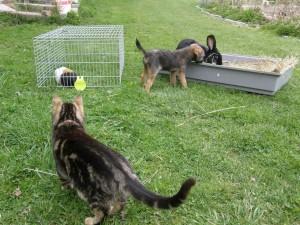 Maiky kamarádi s domácími spolubydlícími zvířátky.