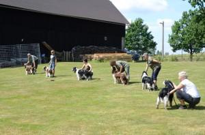 Nástup starších psů - Exy, Ebony, Huber, Giulian, Ingo a Kerd
