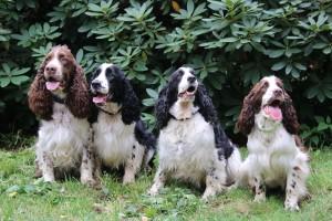 Bylo teplo a taky psi dost lítali...a nejvíc Beli...zleva Iran, Vigo, Mendy a Werra-Beli.