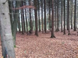Krásný podzimní les - hledáme si místečko na odložení.