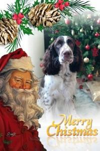 Krásný zbytek vánoc a vše nej do nového roku!!!