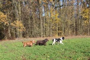 Xantos se svými kamarády na procházce.