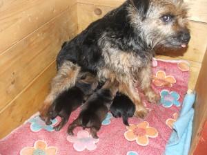 Wanda se dobře stará. Jedno miminko není vidět, je schované pod maminkou.