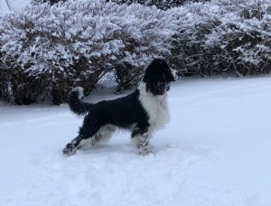 Weston (Barny) a jeho první sníh.