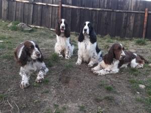 Giulian, Werra-Beli, Mendy a Reisha.