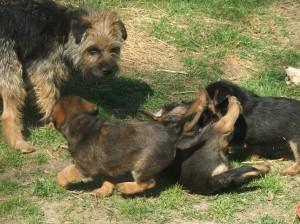 Wanda, Niké, Nestor a Nessie.