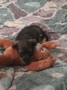 Dante má také svou hračku.