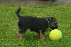 A trochu hraní s míčkem neuškodí.