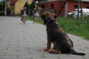Na výletě se také setkala s husami!