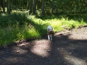 Pernatá byla v porostu na pokraji lesa.