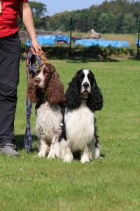 Iran a Vigo jsou vedeni jako záchranářští psi.