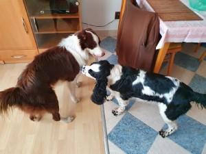 Wendy (Sofie) má nového přítele Baddyho.