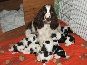 S maminkou foto ve čtyřech týdnech. Zleva Zoro, Zuru, Zoreen, Zaira, Zarek a Zayne. Máma Werra-Beli je vzorná matka.