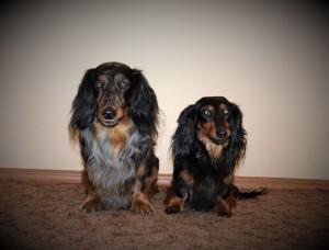 Narsilek a Cápa opojeni psí láskou.