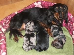 Vzorná máma Capetka s dětmi.