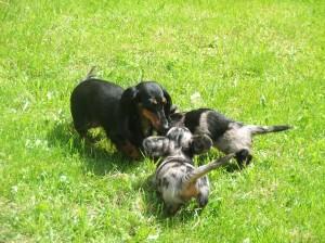 S maminkou na zahradě tygříci Dianka a Dráček.