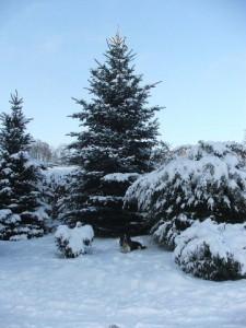 Zimní radovánky leden 2010