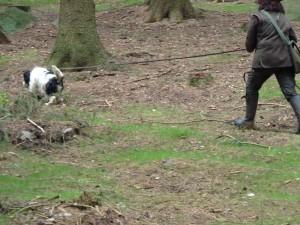 Nejraději mám však lovecký výcvik a všechno co k němu patří. Po stopě plnou parou vpřed!