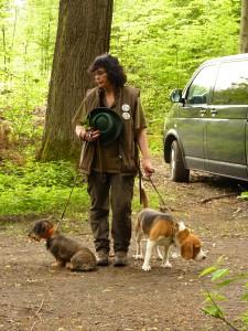 Magic Speel Rapa Nui (beagle) ů- BZ II.c., LZ I.c. 2015, pes velmi svůj, ale výborný lovecký pes, náruživý a velmi chytrý, Lara z Chraštínského lesa - jezevčice, ZN - 75 b., BZ II.c., LZ I.c. 2015, šikovná, ovladatelná