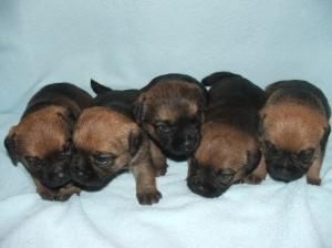 Foto tři týdny - Jack, Jerry, Jackie, Jessie a Jessika
